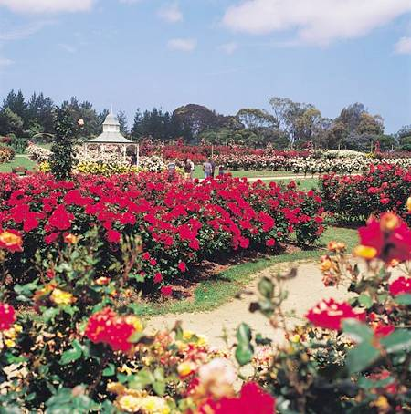 State Rose Garden - Werribee Mansion