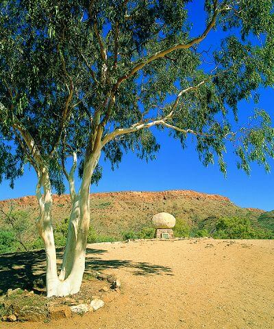 Ghost Gum - Alice Springs