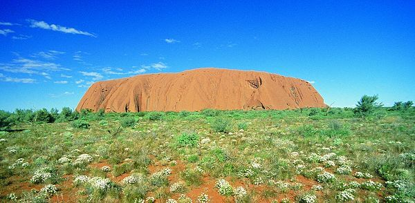Uluru (Ayers Rock) with wildflowers