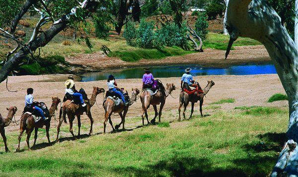 Camel Safari near Alice Springs